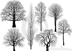 Collection of trees in black - oak, birch, aspen, poplar, beech, willow, lime - vector illustration
