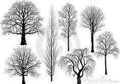 Collection of trees in black - oak, birch, aspen, poplar, beech, willow, lime - vector illustration