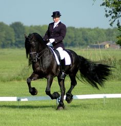 "Friesian doing dressage (this looks like  tempi to me, but it's hard to tell in stills). (""In The Eye of The Beholder"")"