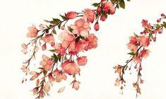 цветы, рисунок, акварель, ветка, сакура, японская, вишня