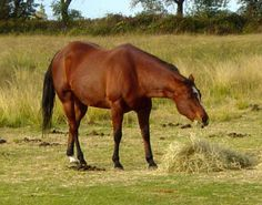 Your Pregnant Mare's Last Three Months, by Juliet M. Getty, PhD | Horse Digest