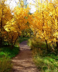 Autumn is setting in and is a great time to follow a path just to see where it will take you.