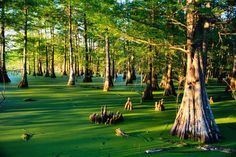 "I know the bayou isn't really a ""safe"" vacation spot, but you can't deny it's pretty!"