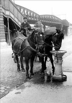 Abreuvoir pour chevaux - Paris, vers 1900
