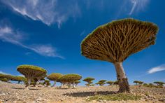 Socotra Archipelago, Yemen - World's Strangest Natural Wonders   Travel + Leisure