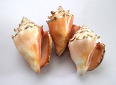 Gold Leaf Painted Jamaican Conch Shell  by BackBoneHandmade, $4.00