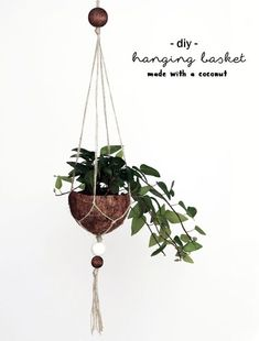 DIY Upcycling Kokosnuss Blumenampel | Coconut Makramee Hanging Basket | Pflanzen | plants | do it yourself | deko | basteln | urban Jungle bloggers | Zimmerpflanzen | Anleitung Idee Tutorial kreativ | handmade | coconut | plant pot | Blumentopf | grüner Wohnen