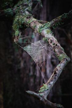Spiderweb  (via Web by Michelle Morris Denniston / 500px)