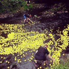 Duck race! #stockbridgeduckrace #stockbridgeduckrace2015 #stockbridge #edinburgh #stockbridgeedinburgh #scotland