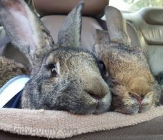 A pair of bunny noses - June 24, 2016