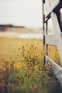 Wild flowers and fences in open fields...