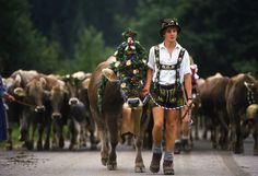 Eine Herde die von der Alm kommt hört man dank der Glocken schon von weitem.