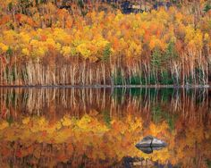 Take your fall foliage photography to the next level with these 5 techniques.  #discovertheforest