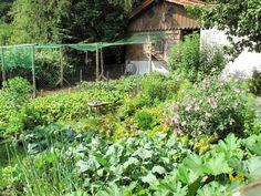 Pro zdravou a bohatou úrodu v přírodní zahradě je potřeba znát nároky jednotlivých druhů na živiny a snažit se dodržet střídání plodin. Proč a jak? Čtěte dál.