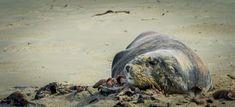 Leon Marino Sea Lion, New Zealand New Zealand, Beautiful Landscapes, Animales
