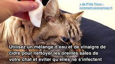 Utilisez du vinaigre de cidre et de l'eau pour nettoyer les oreilles sales du chat