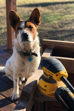 """I carefully removed the damaged veneer and cleaned the wood well before adding the white wax. I'm pretty sure that """"Bud"""" (my rescue) helped by licking."""
