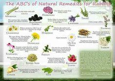 Natural remedies for rabbits