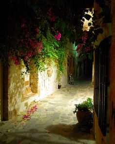 Fallen petals in Old Town | Historical District, Chania, Cre… | Flickr