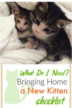 Checklist for Bringing New Kitten Home [Free Printable] Taking Care Of Kittens, Baby Necessities, Baby Kittens, Cat Health, Home Free, Fur Babies, Free Printables, Cat Lovers, Dog Cat