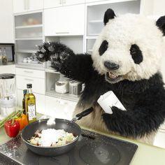 Funny Panda Pictures, Panda Funny, Cartoon Panda, Panda Wallpaper Iphone, Panda Wallpapers, Cute Cartoon Wallpapers, Panda Drawing, Panda Art, Dancing Baby