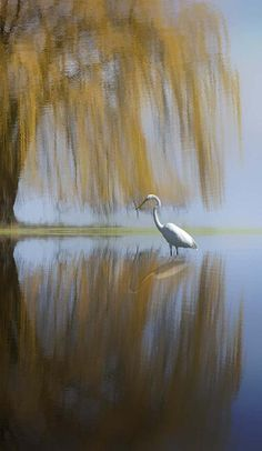 Cranes carry this heavy mystical baggage. They're icons of fidelity and happiness. The Vietnamese believe cranes cart our souls up to heaven on our wings.  ~ Mitchell Burgess, Northern Exposure, The Bad Seed, 1992