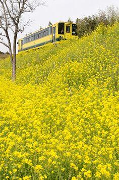 菜の花の時期にムーミン列車の旅に出る!