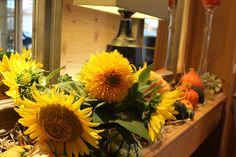 Dame Nature embellit le RoyAlp 🌻🌻🌻 L'occasion de profiter des derniers jours de l'été au sommet! Dame Nature, Spa, Occasion, Plants, Plant, Planets