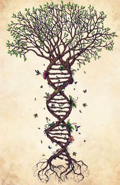• Illustration art life design nature myart biology artists on tumblr DNA The Fabric of Life renecampbellart •