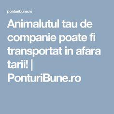 Animalutul tau de companie poate fi transportat in afara tarii!   PonturiBune.ro
