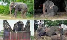 No more animals as entertainment. We should all help with this.  Incredible sight of the elephant that cried