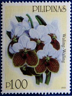 Philippines. ORCHIDS TYPE OF 2003 WITH PLANT NAMES. WALING-WALING. Scott 2857 A897, Issued 2003. Perf 14, P100.