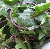 Insalata Di Spinaci e Fettina Di Manzo (Organic Baby Spinach Salad with Grilled Flank Steak)