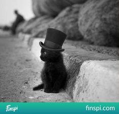 słodziutki maluszek czarny w cylindrze koffam ♥♥♥ #koty #pupile #Koffam