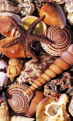 Image detail for -View bigger - Beautiful Sea Shells LWP for Android screenshot