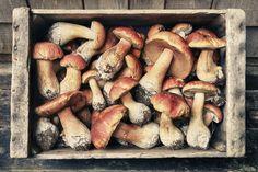 California: Hunt mushrooms (or just eat them) during Mendocino fest
