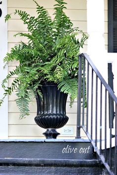 Olive Out Urns On Southern Porches Garden Yard Ideas Fountains