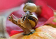 autumn snails II by FrancyM on deviantART