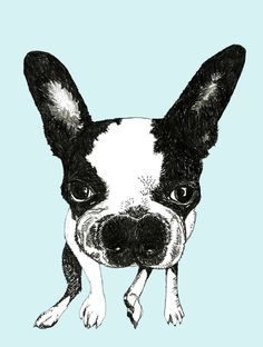 Boston Terrier  Dog Art Print by corelladesign on Etsy, $20.00