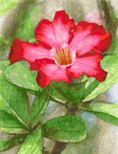 Desert rose. Free cross stitch pattern