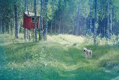 Every dog has a secret treehouse.
