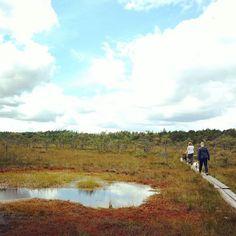 Sunday scenery. 🍂🌤 #finlandphotograpy #visitfinland #thisisfinland #ourfinland #finnishnature #finnishphotographer #suomi #suomiretki #retkipaikka #retkeily #luontovalokuvaus #suo #pitkospuut #latesummer #nordiclife #nordicphotography #nordicinspiration #scandinavian #scandinavianliving #pyhtää #kaakko135 #フィンランド#swamp #summerphotography #natureporn #peopleinframe