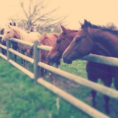 Horses, they always stick together...