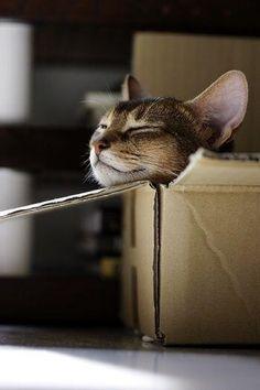 every cat loves his box. pic.twitter.com/GQUl1qL62i