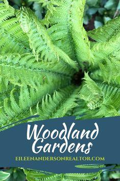 Woodland Gardens #shadegardens #shadeplants #homeimprovement #landscapedesign #gardenideas Herb Garden Planter, Shade Garden Plants, Shaded Garden, Full Sun Garden, Garden In The Woods, Lawn Maintenance, Planting Roses, Peonies Garden, Spring Bulbs