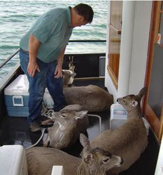 Wild deer rescued from drowning by boater Tom Satre and his family. (Story and photos)