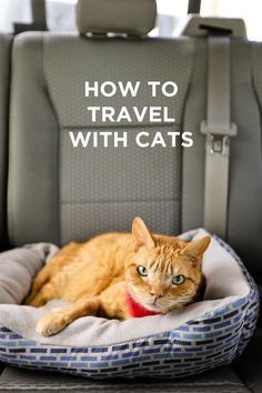 Traveling with Cats - How to Prep Your Cats for Life On the Road or Just a Long Road Trip // localadventurer.com