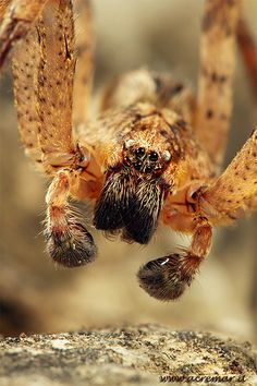 Close up spider shot! Haha he looks so quizzical