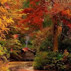 Fall Pictures, Nature Pictures, Beautiful Pictures, Autumn Scenes, Fall Wallpaper, Autumn Photography, Photography Ideas, Autumn Inspiration, Nature Scenes