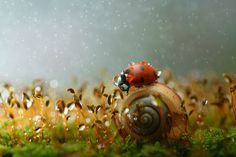 Vadim Trunov, a self-taught nature photographer based in Voronezh, Russia, takes beautiful macro photos of snails, insects and mushrooms that seem to personify them and weave beautiful little stories around these oft-overlooked creatures' lives. Fotografia Macro, Photographie Macro Nature, Cool Pictures, Cool Photos, Butterfly Photos, High Resolution Wallpapers, Amazing Nature, Beautiful World, Reptiles